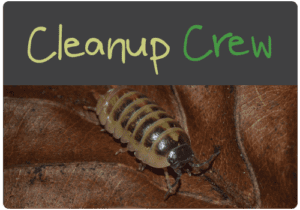 cleanupcrew