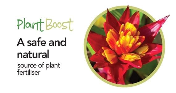 Plant Boost Call to action