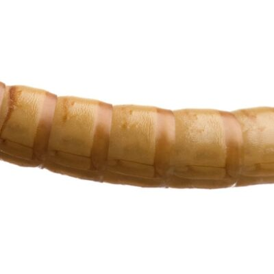 Mealworms Livefood