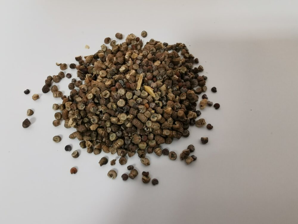 Forget Me Not Seeds 5g