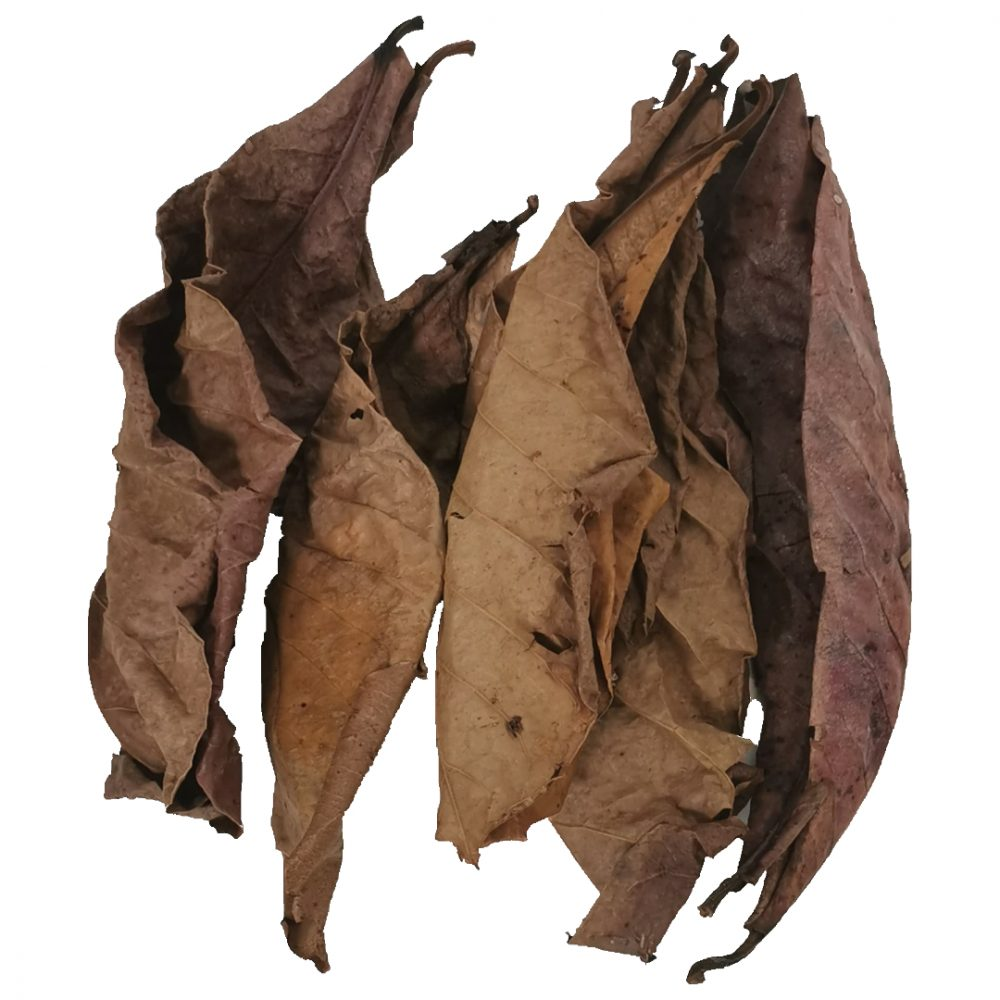 Indian Almond Leaves